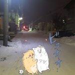 8czkEsZJ42NYEACのサムネイル画像