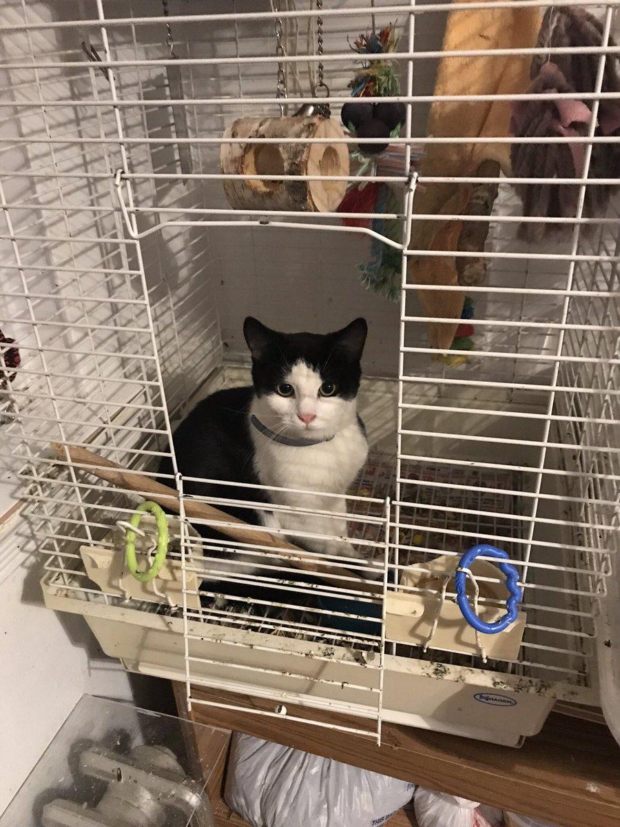 tipsy's not very impressed #catsjudgingmarjorie
