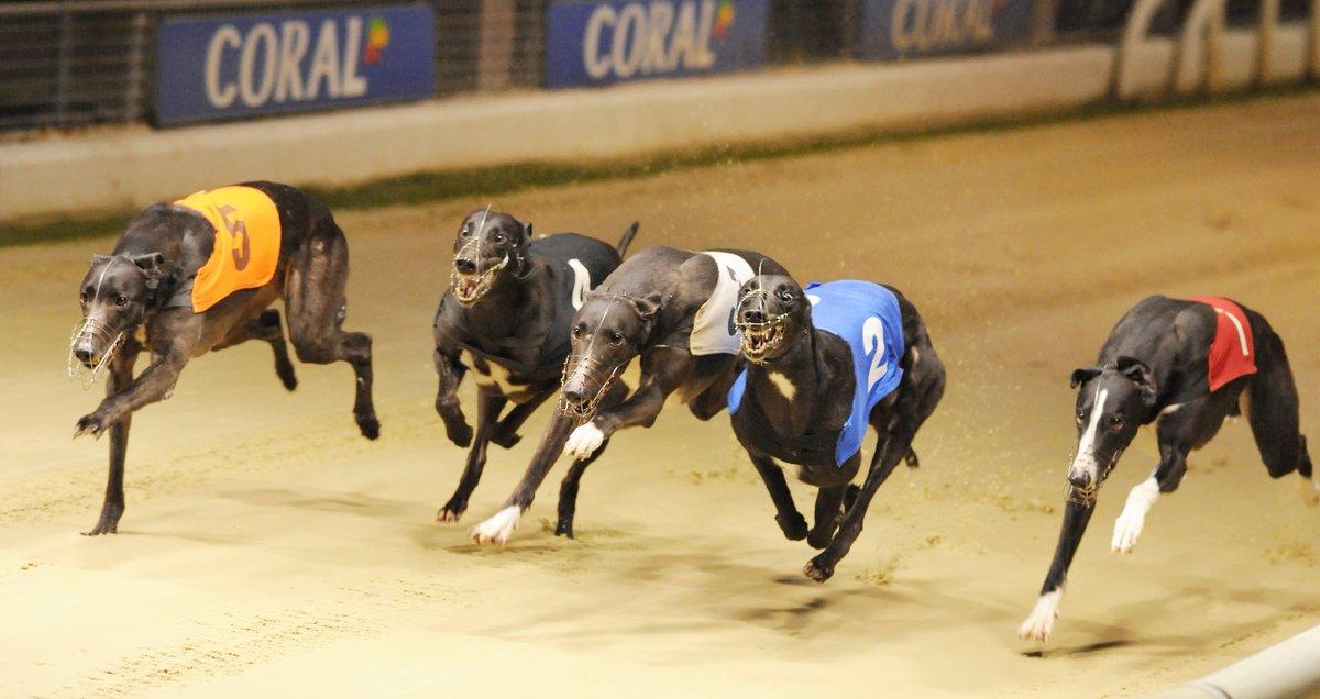 Romford dogs bettingadvice misa pack 1-3 2-4 betting system
