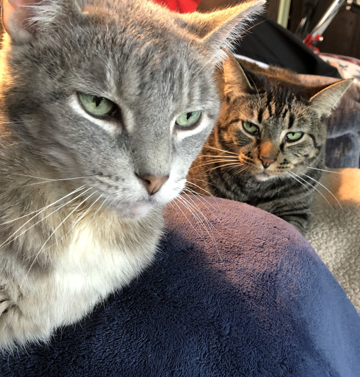 #catsjudgingmarjorie MTG makes my cats angry.