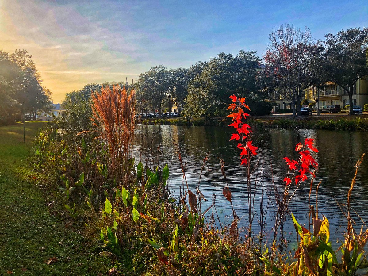 January in central Florida reminds of early spring in New England. #celebrationflorida #PhotographyIsArt #photograph #photo #thursdaymorning #ThursdayThoughts