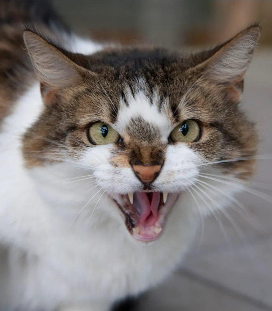 @BitchestheCat Cloe thinks a  psychiatric evaluationof @mtgreenee is in order #catsjudgingmarjorie