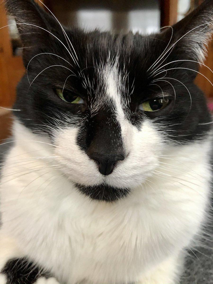 Bentley knows that woman is vile #catsjudgingmarjorie