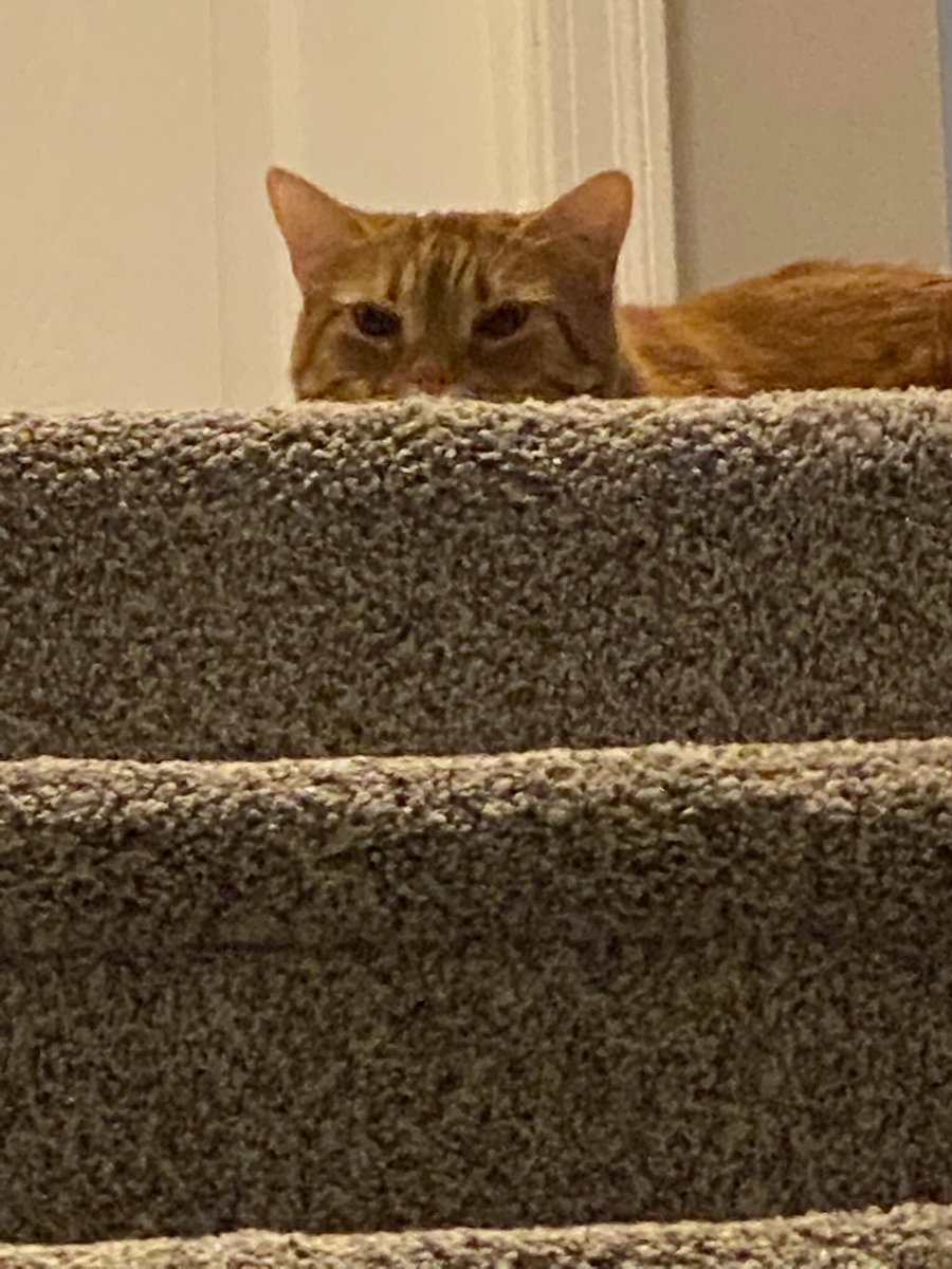 #catsjudgingmarjorie Don't even come up those stairs.