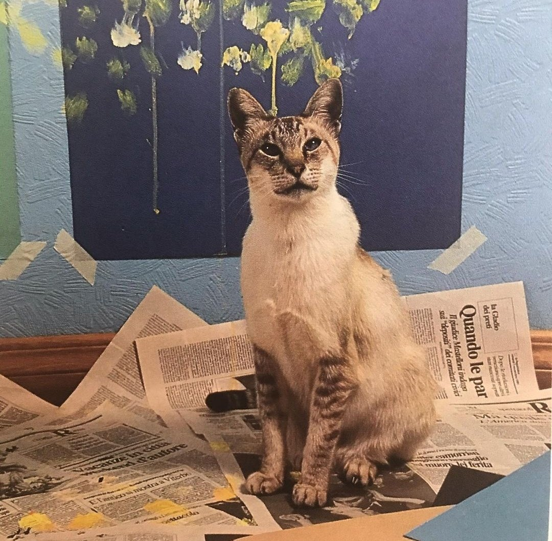 """My cat just called my cousin's cat in Rome and told him about Marjorie Taylor Greene. He said she was a """"stronza bastarda"""" and went back to his painting... #catsjudgingmarjorie"""