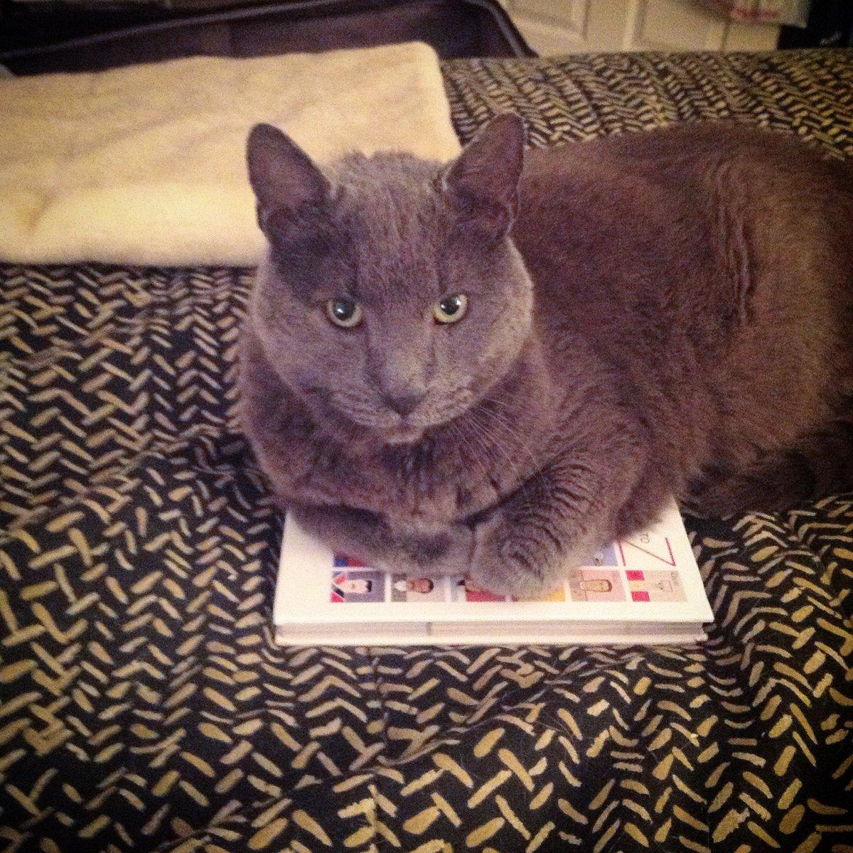 @JakeLobin Ghost finds @mtgreenee deplorable. #catsjudgingmarjorie
