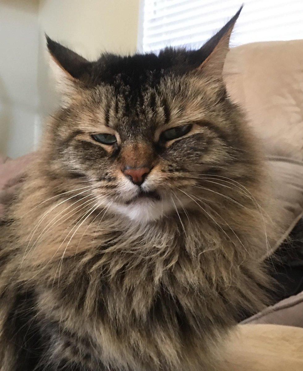 Okay, so yeah, this is my favorite trend of all time  😼😼😼#catsjudgingmarjorie