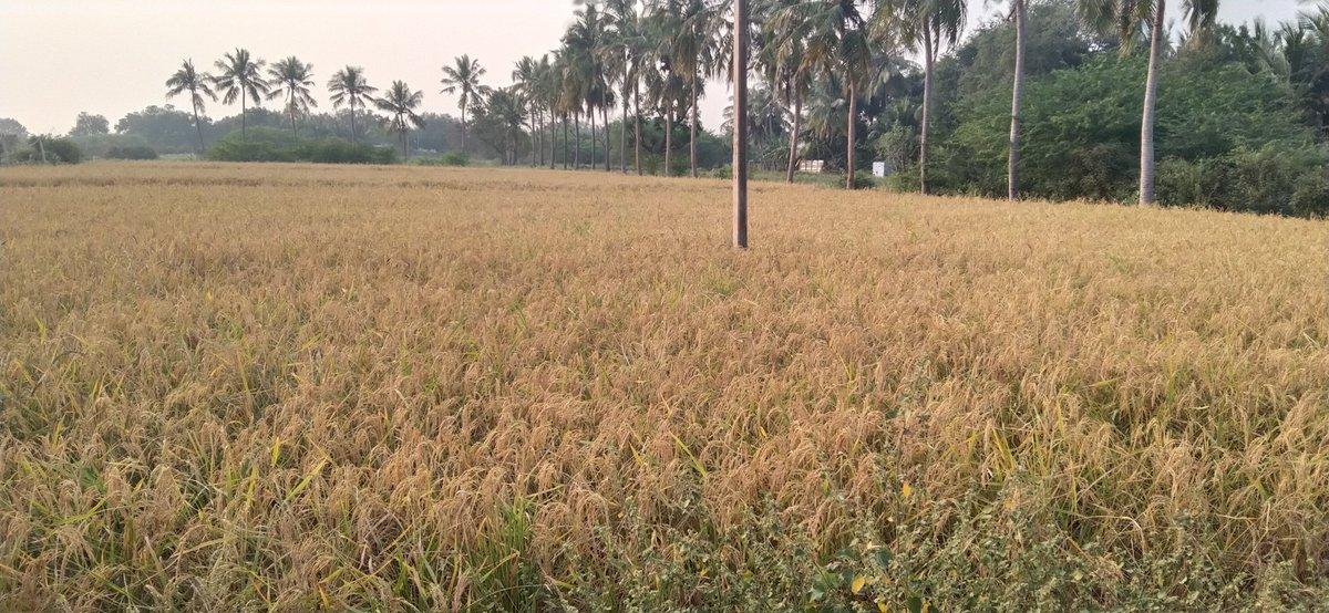 #silhouettechallenge #الجمال_اللبناني #HANBIN_BELIFT #zinnergasse #SilhoutteChallenge #القصيرات_ولا_الطويلات #เนเน่ #dogecoin #واتساب #wallstreetbets #Pushpa #jeudiphoto  But we are peaceful. @naturelabs  Organic rice