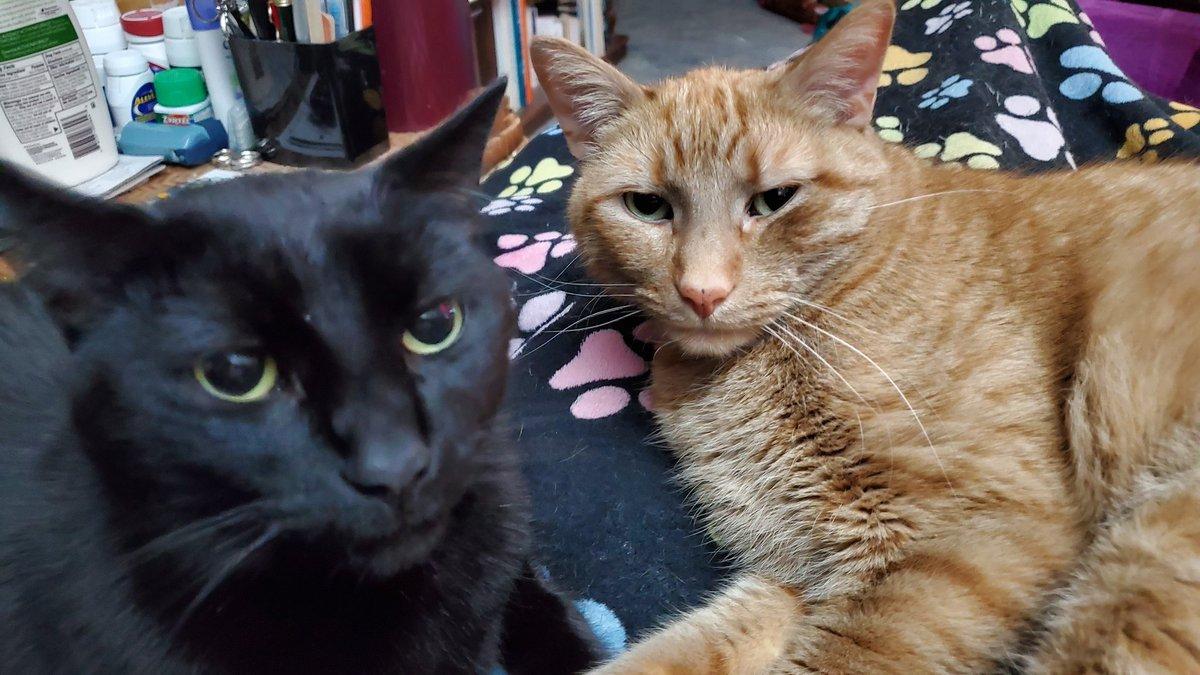 @BitchestheCat @KellyannePolls @mtgreenee Reggie & Rusty are #CatsJudgingMarjorie