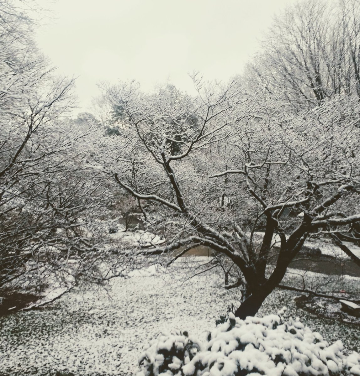 A beautiful dusting of snow. #snowfall #thursdaymorning #writerslife
