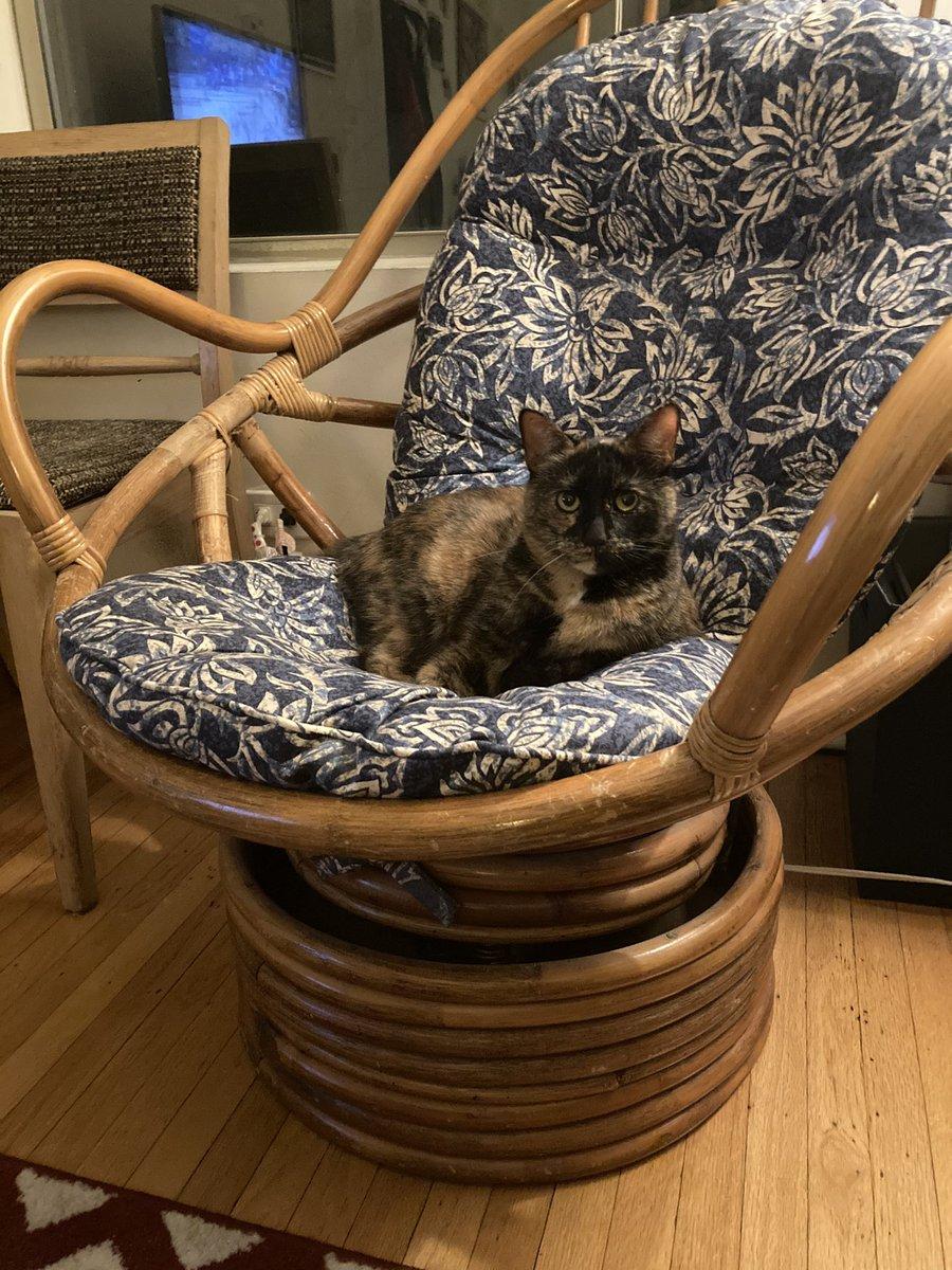 I see you QAnon lady #catsjudgingmarjorie
