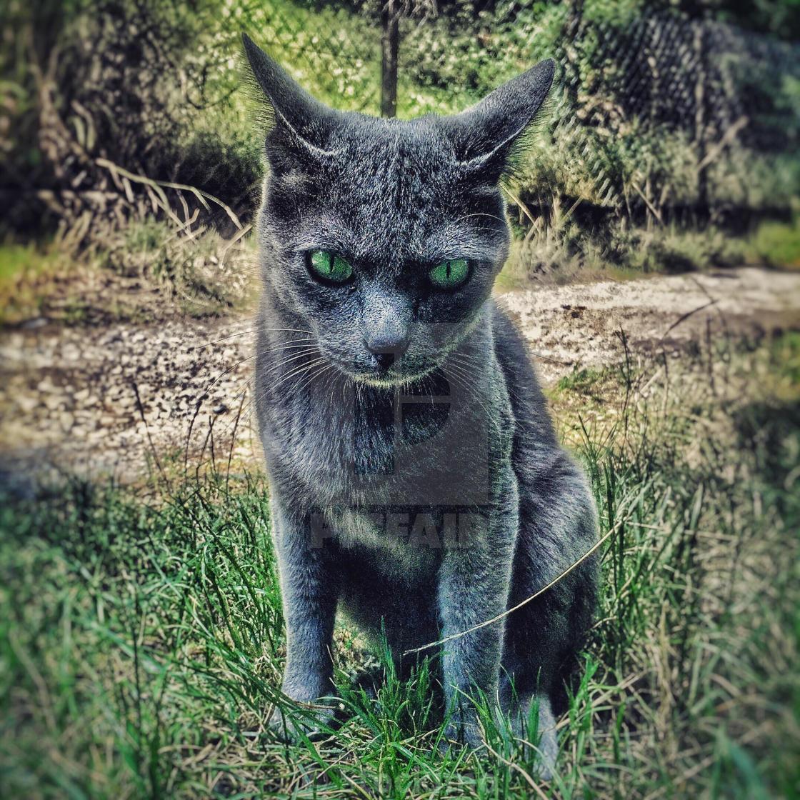 @mtgreenee  #catsjudgingmarjorie