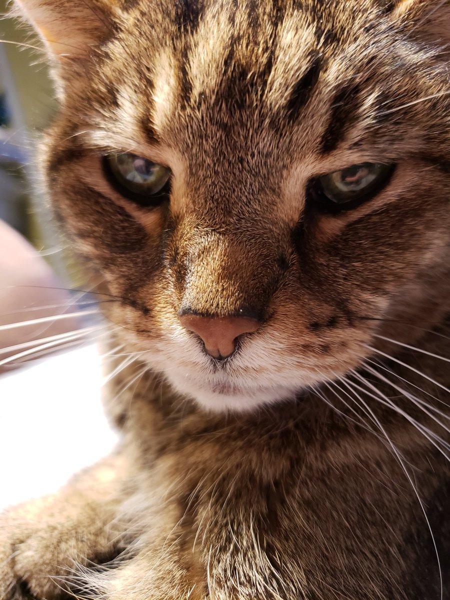 Oh hey, we're judging Qaren again tonight. Always a good time. #catsjudgingmarjorie