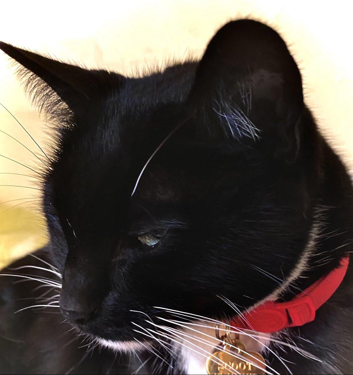 @wedge9986 @BitchestheCat @KellyannePolls @mtgreenee This Scoot is also supports #catsjudgingmarjorie