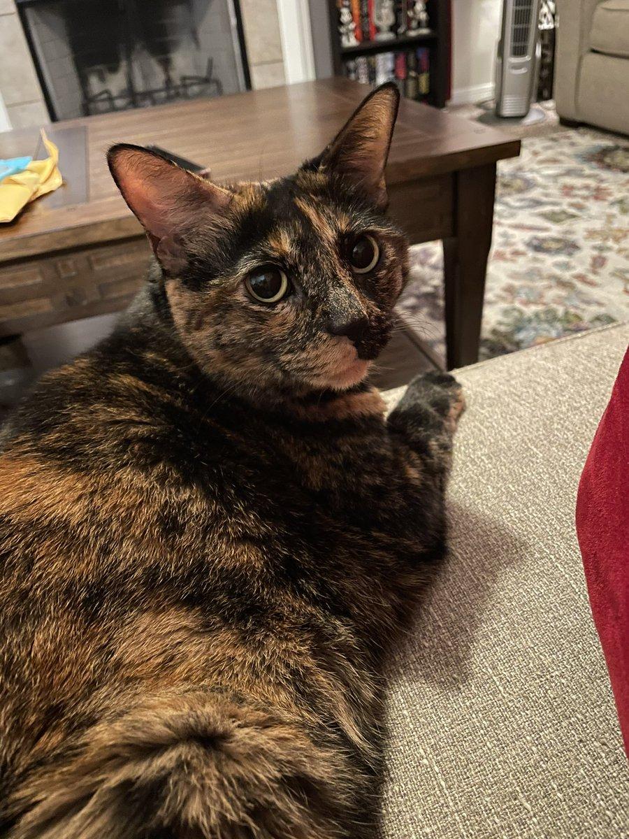 Stormageddon Dark Princess of all has no patience for idiots like @mtgreenee   #catsjudgingmarjorie
