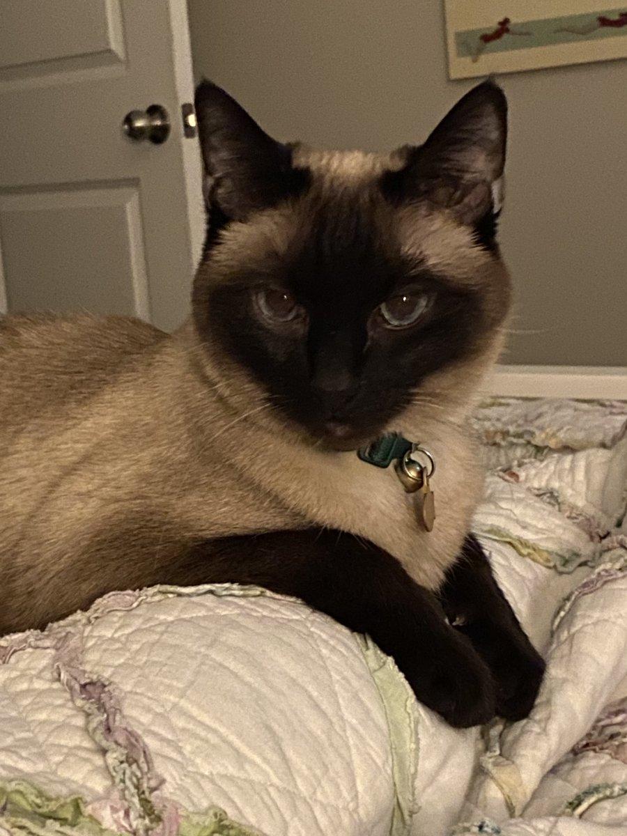Percy has concerns. #catsjudgingmarjorie