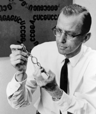 1922: Robert Holley born, won 1968 #NobelPrize for interpretation of genetic code and its role in protein synthesis #ThisDayInBiotech