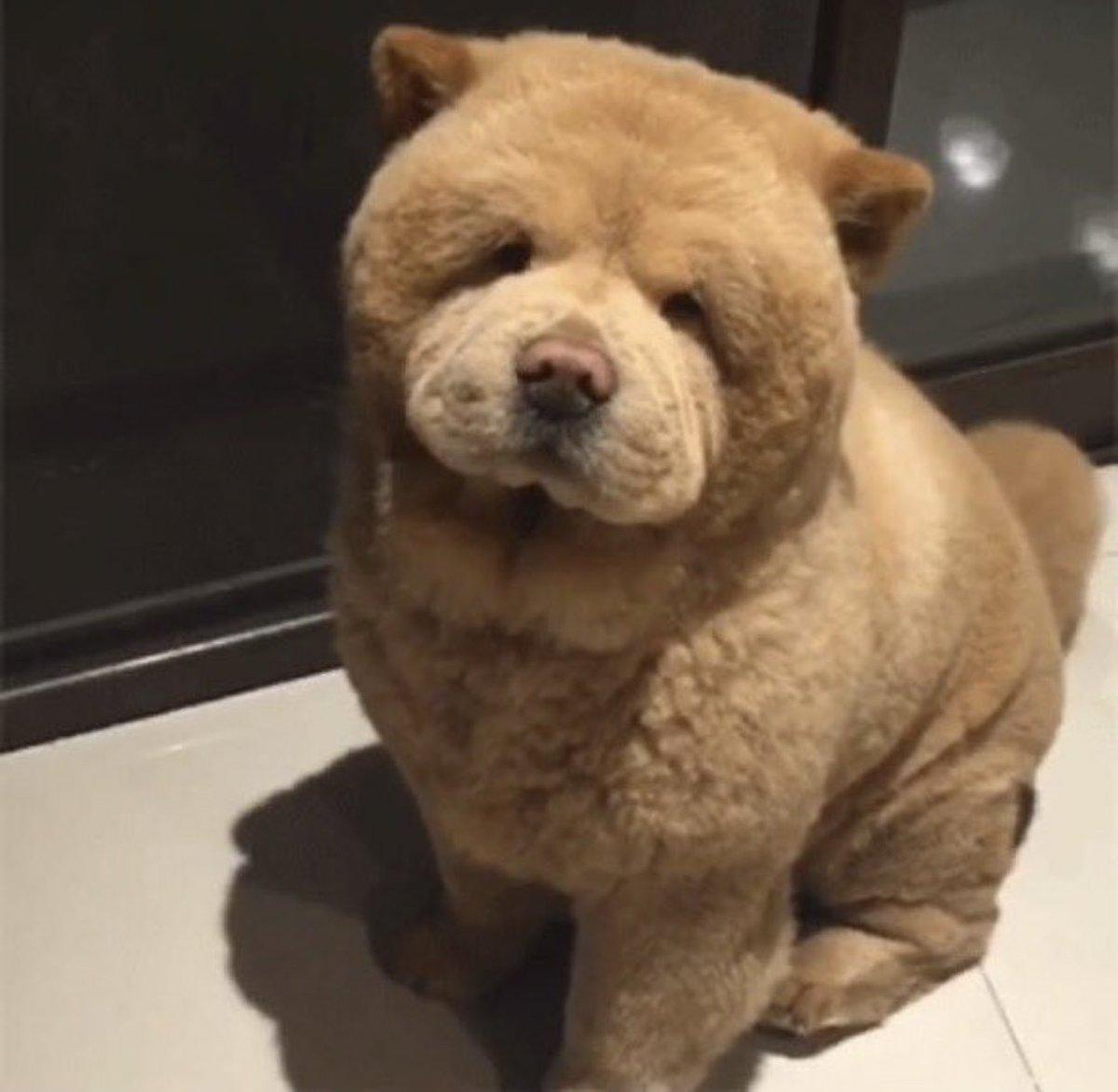 クマみたいな犬🐻