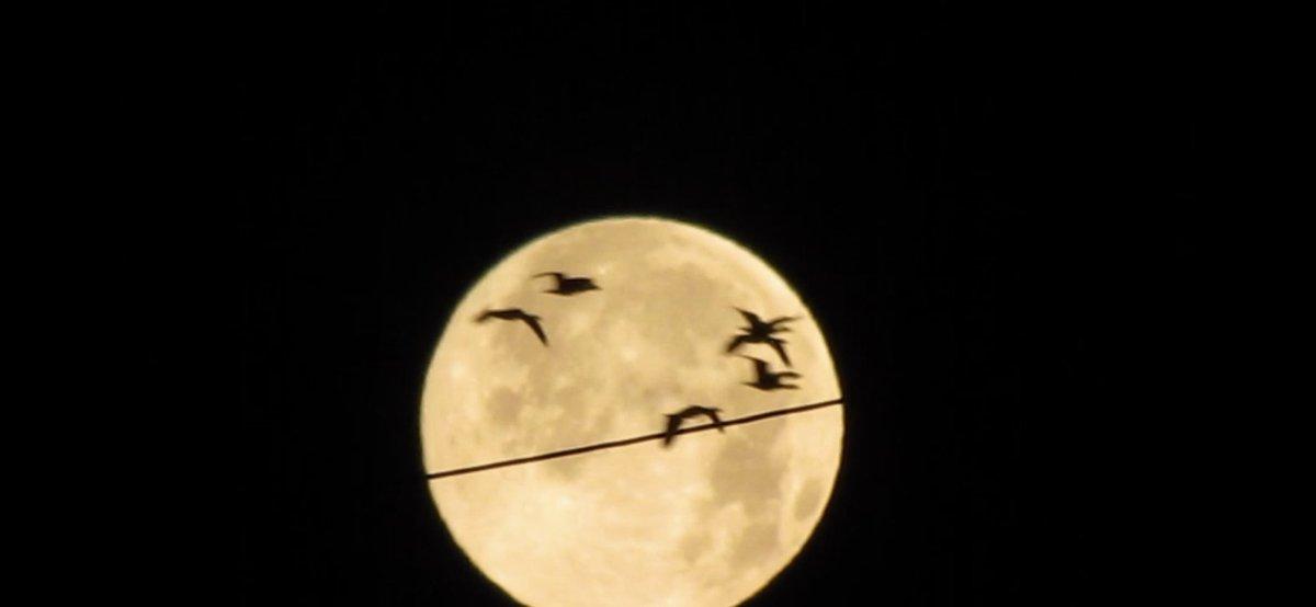 #birdwatching #birds #Birdwatch  #BirdsSeenIn2021 #thursdaymorning #FullMoon