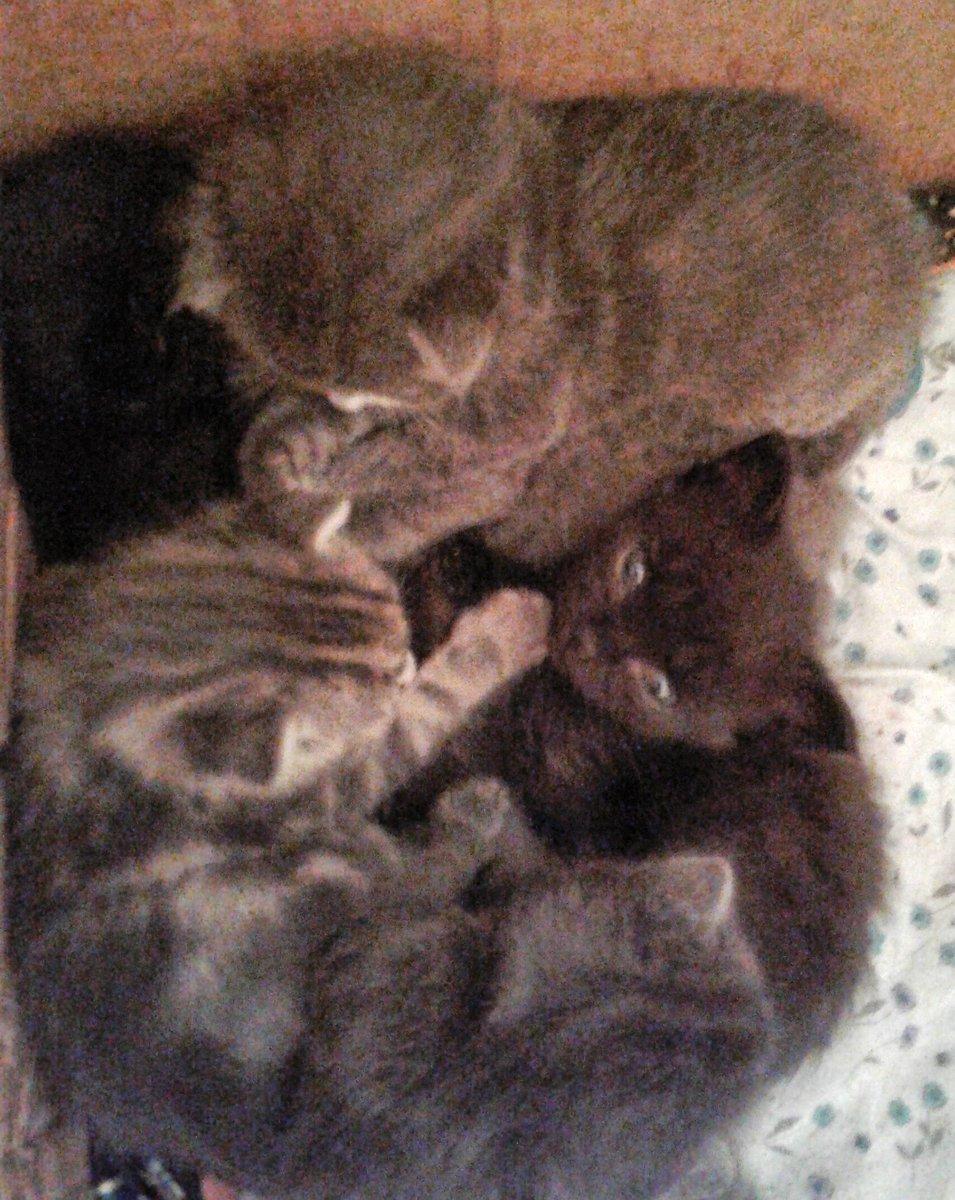 Here borrow some of ours! #catsjudgingboebert #catsjudgingmarjorie #CatsJudgingKellyanne