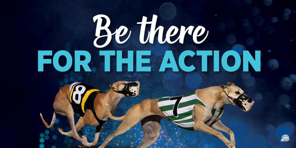 Irish greyhound derby 2021 bettingadvice citadel ltd binary options