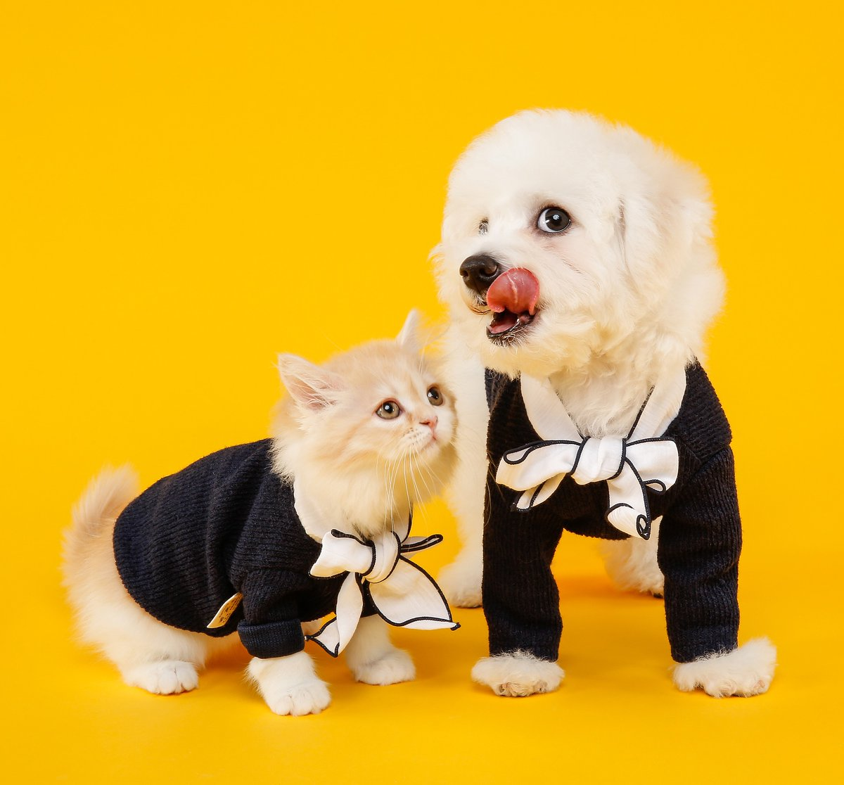 Good morning!! RT Guys! #rt Everything for your Pet !!! PET NEWS https://t.co/QfVuiUwrxC #love #pet #pets #animal #follow #funny friends style fashion food travel https://t.co/ZRyppvR1jb