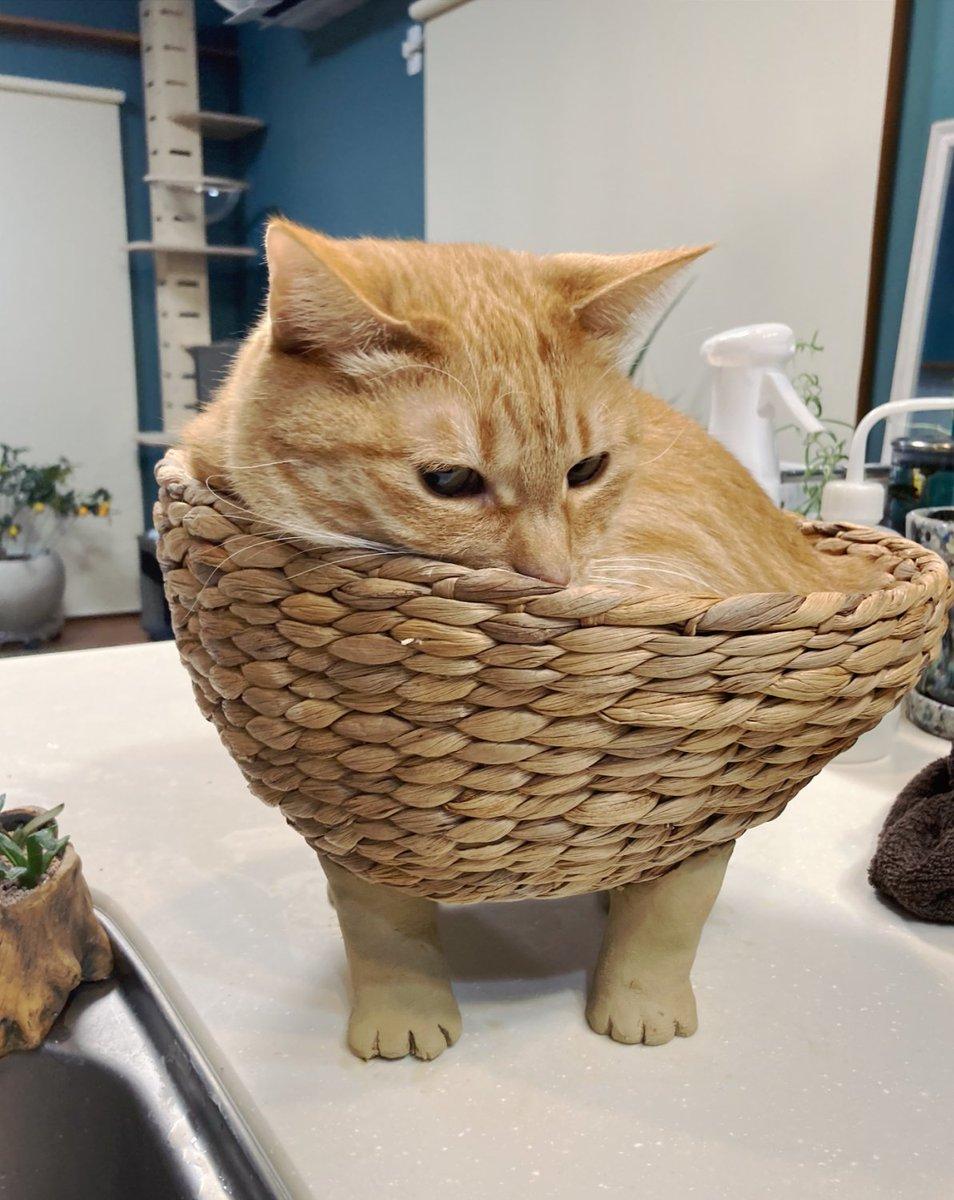 猫の足を作ってカゴに付けたら可愛いだろうな〜猫入ってくれると良いなぁ〜って、粘土で成形してトイレ行って戻って来たら、シバ先輩の行動の早さにチビりました(練り立てホヤホヤ柔らか粘土なのですが)