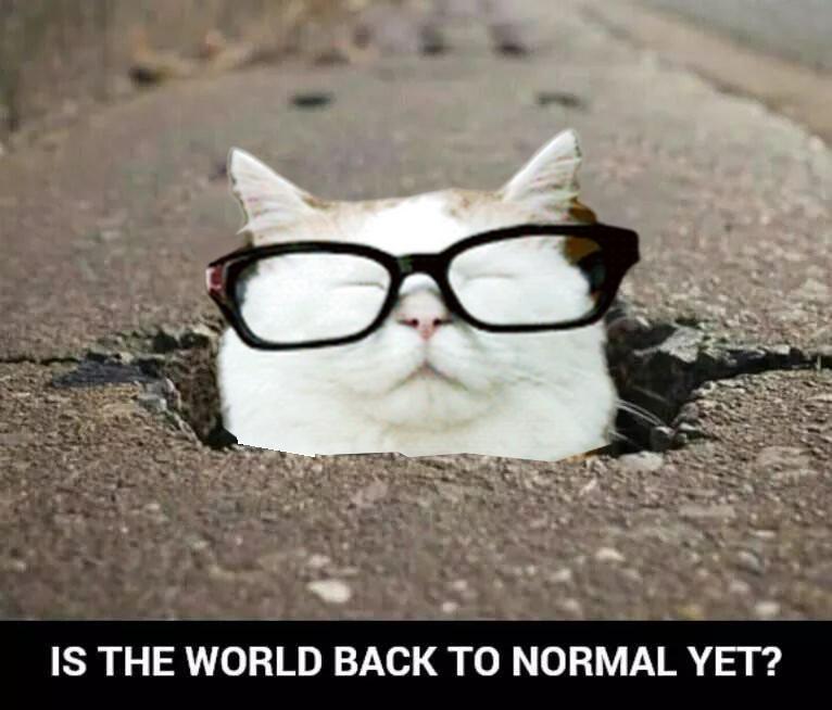 "Catturd ™ on Twitter: ""… """