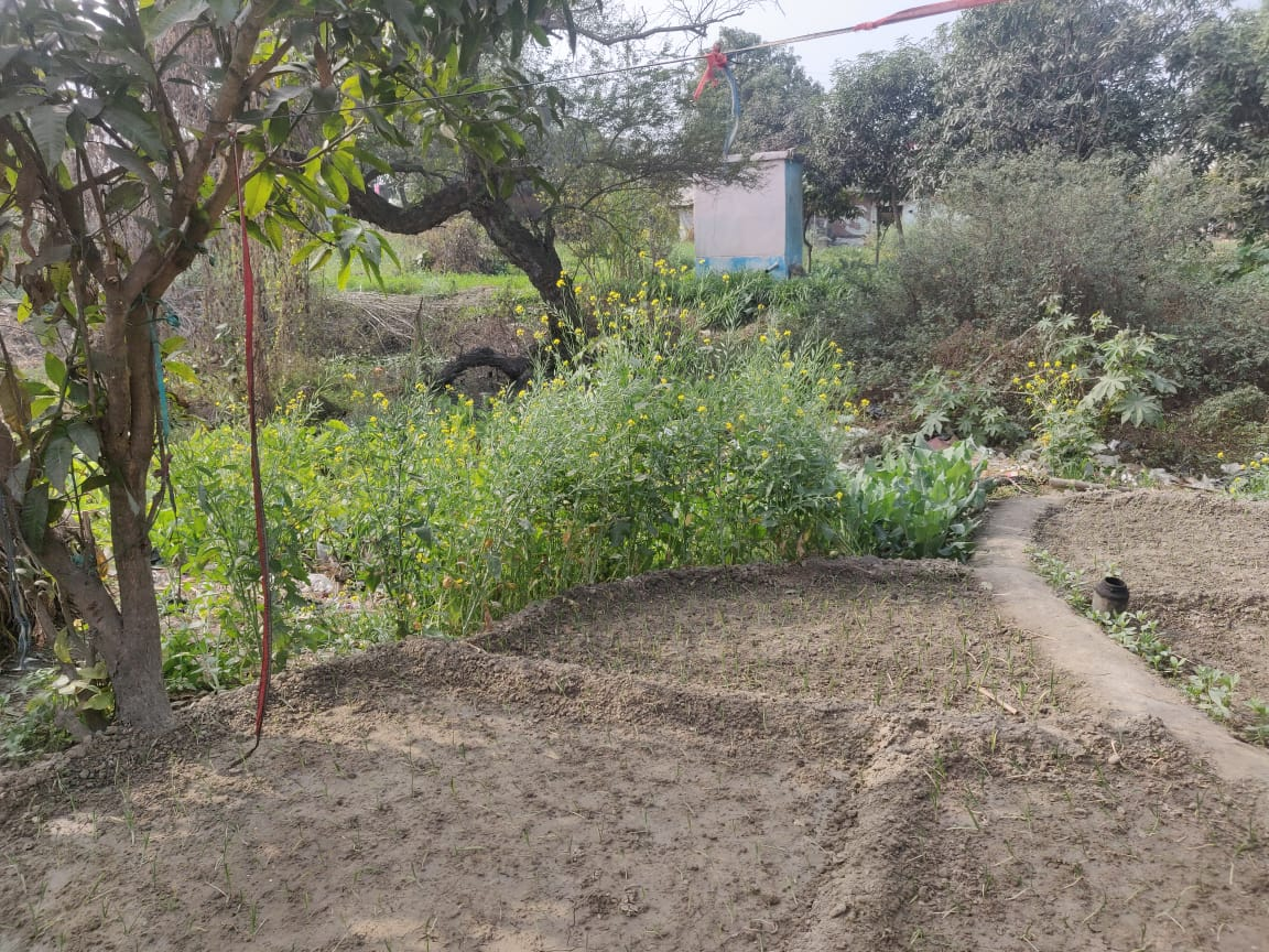 An interesting initiative in Basti district, #UttarPradesh. Kitchen gardens have been set up to consume greywater from households, thus adding to the state's progress towards achieving the status of #ODFPlus. #SwachhBharat   @PMOIndia @narendramodi @gssjodhpur @UPSingh_Jal