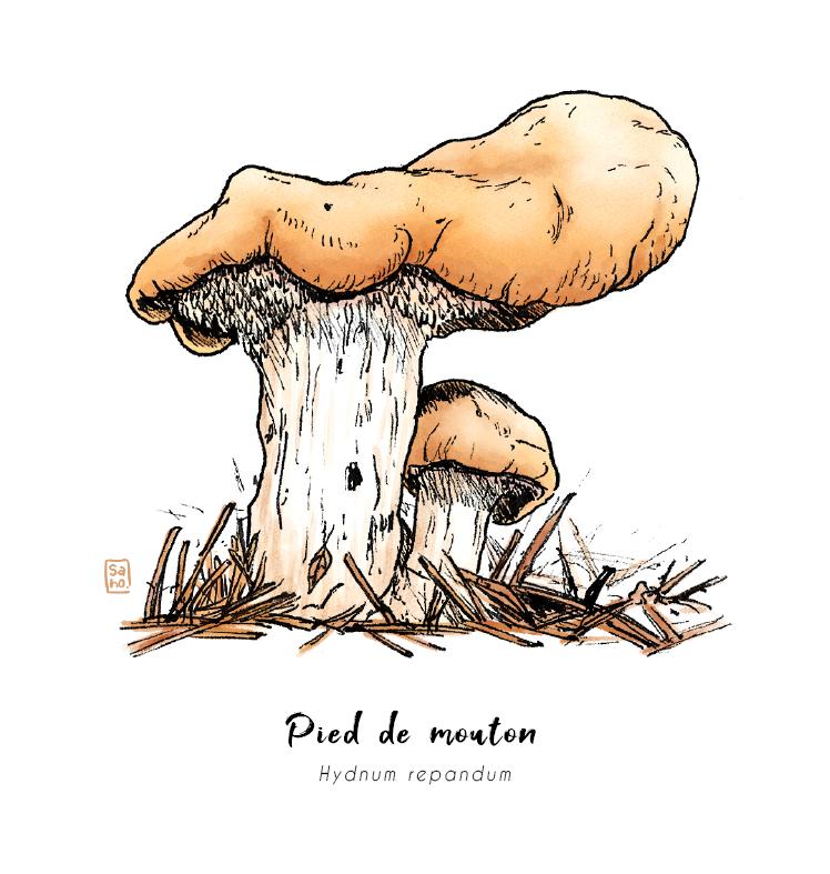 Bonjour ! Voici mon premier print champignon🍄  Hello ! Here is my first mushroom print 🍄  #mushrooms #illustration #illustratorfreelance #art #ArtistOnTwitter #ArtOfTheDay #traditionalart #digitalart
