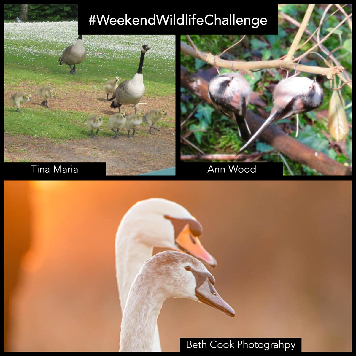 There were some fantastic images submitted for our #WeekendWildlifeChallenge this week!  Here are just a few of your entries. Thanks for showing them with us!  Our challenge next week will be announced on Friday... it involves something sly, furry and orange. Any guesses?