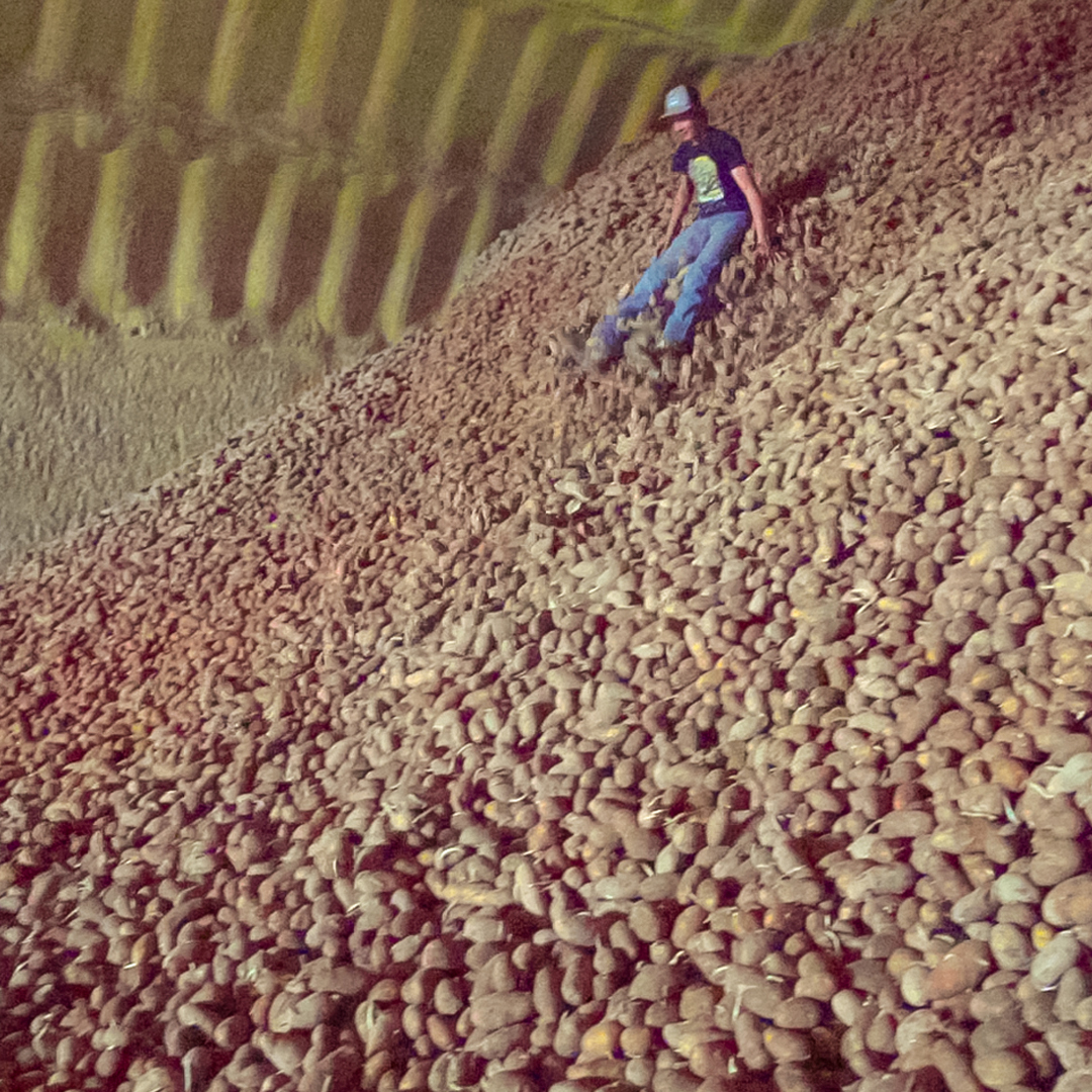Why these #farmers are stuck with billions of pounds of potatoes.                                   #Agricultura #WhatsApp