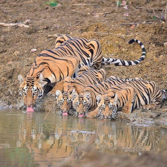 #ranthamboresafaribooking #ranthamborenationalpark #ranthamborejeepsafari #ranthamboretigerreserve #Ranthambore  Fathom Your Vacation with the Mesmerizing Sightseeing in Ranthambore  Among the entire wildlife sanctuaries in the world,