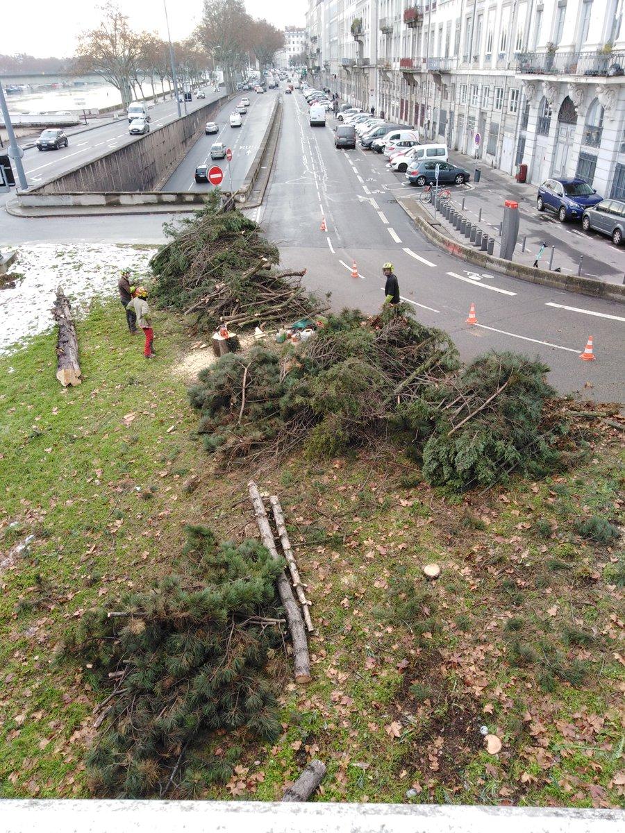 Qu'est ce qui leur prend à Lyon 1 ? Massacre à la tronçonneuse !!! Des pins trentenaires ! #Lyon #lyon1 #ecologie #Scandal #CouvreFeu18h