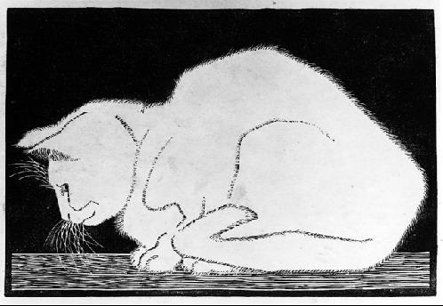 White Cat II, 1919 #escher #expressionism
