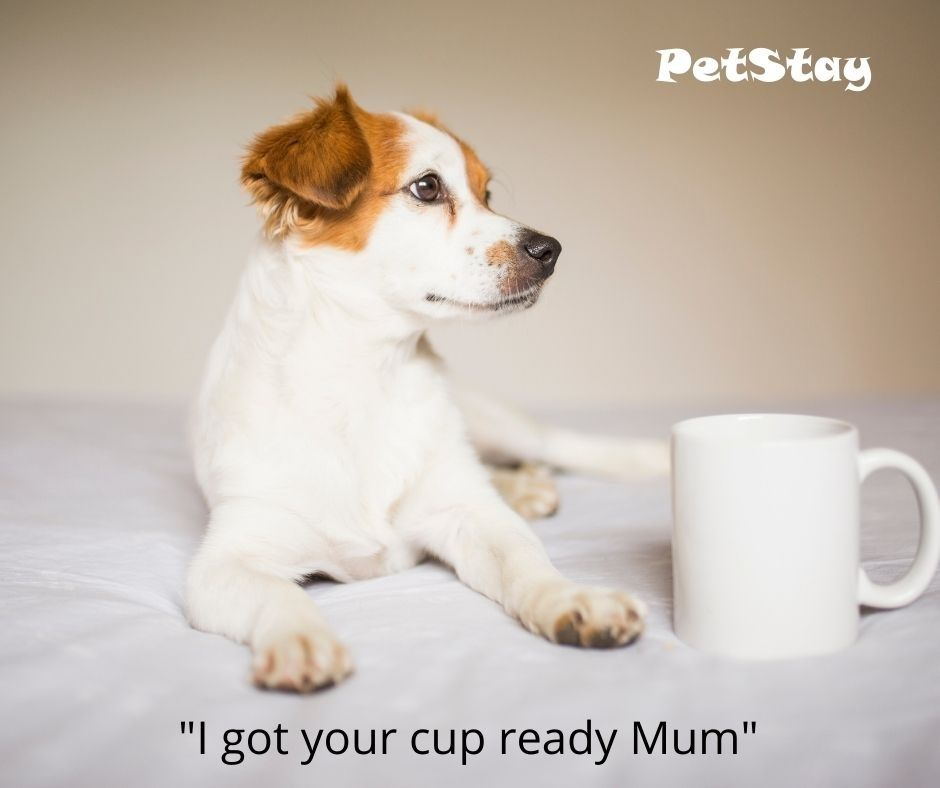 Today is National Brew Monday, so put the kettle on and cuddle up with your pooch ☕🐕❤  #dogsoftwitter #dogs #DogsofTwitter #nationalbrewmonday #weloveodgs #dogsrule #becausedogsarefamily #doggiecuddles #doggos #nationalbrewmonday #january #januaryblues #coffee #tea #cuppa
