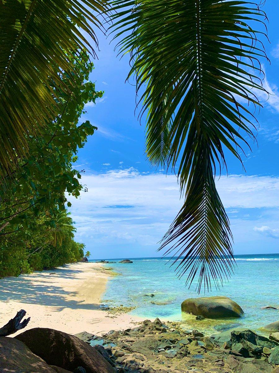 Let's banish #BlueMonday with a little #island 🏝 #inspiration... for when we can all #travelagain! 🌎✈️🥰   #SilhouetteIsland,#Seychelles   #Zanzibar   #Tembok,#Bali   #MondayMotivation #travelphotography #view