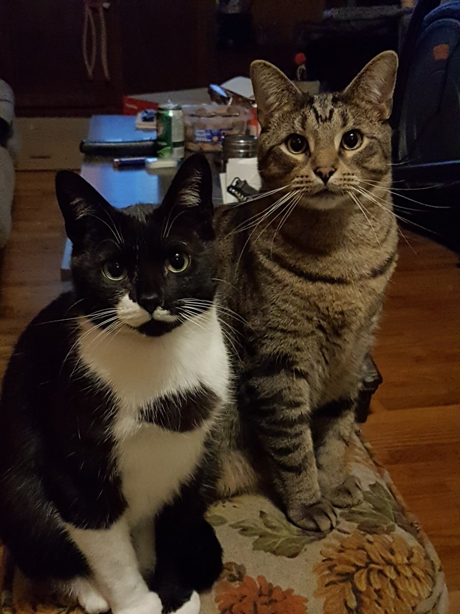 """Monday morning smile!  """"Batman and Robin, a.k.a lord voltimor and squawk almost 2 years old awesome boys 😍""""  #happyendings"""