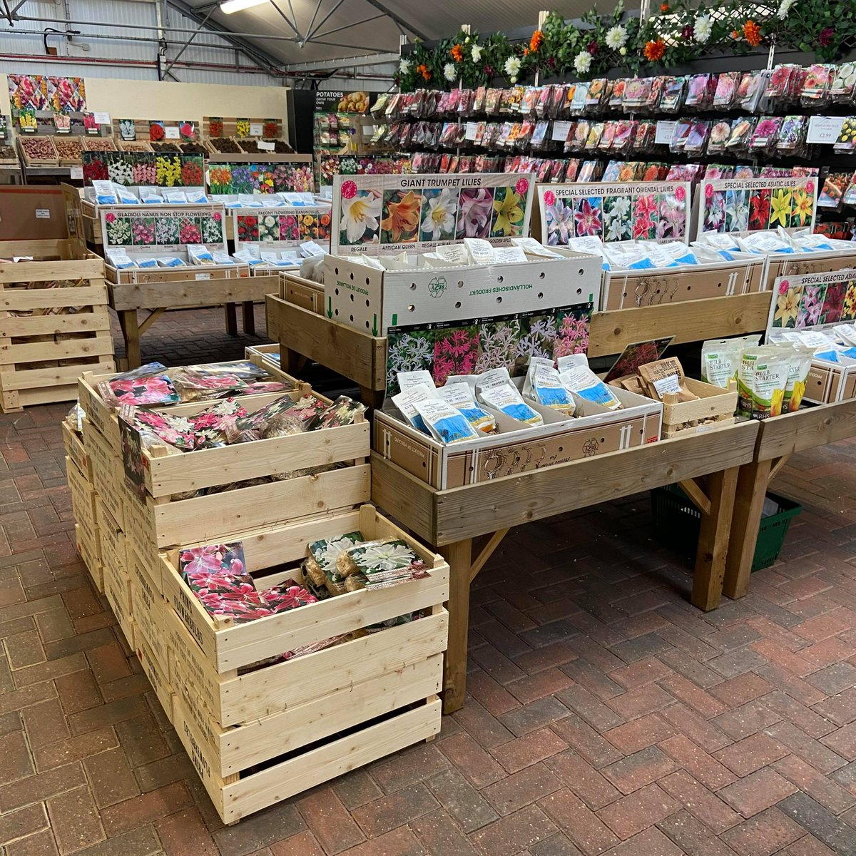 #Summer #Flowering #Bulbs  Grow something a little different this year to make your garden burst with colour in summer. Trying a new variety of flowers will broaden your growing skills and help transform any dull areas.