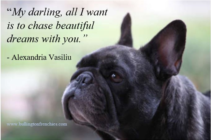 """""""My darling, all I want is to chase beautiful dreams with you.""""- Alexandria Vasiliu, Author of 'Blooming' Bullington Frenchies - (701) 290-3735  . . #bullingtonfrenchies #mondaymotivation #quote #devotion #frenchbulldogs #frenchies #qotd #dreams #love"""