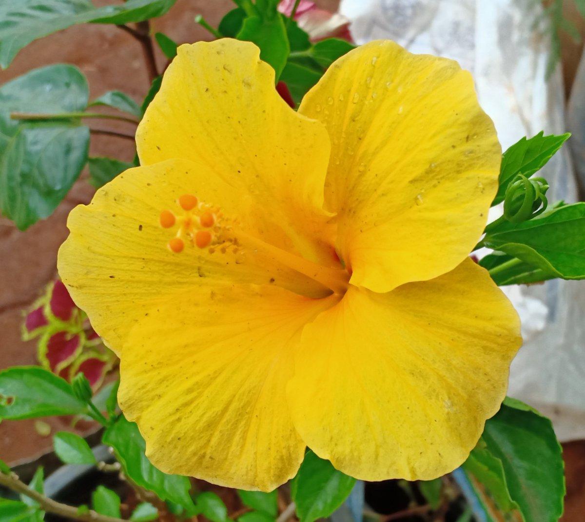 Nature #nature #NaturePhotography #Flowers