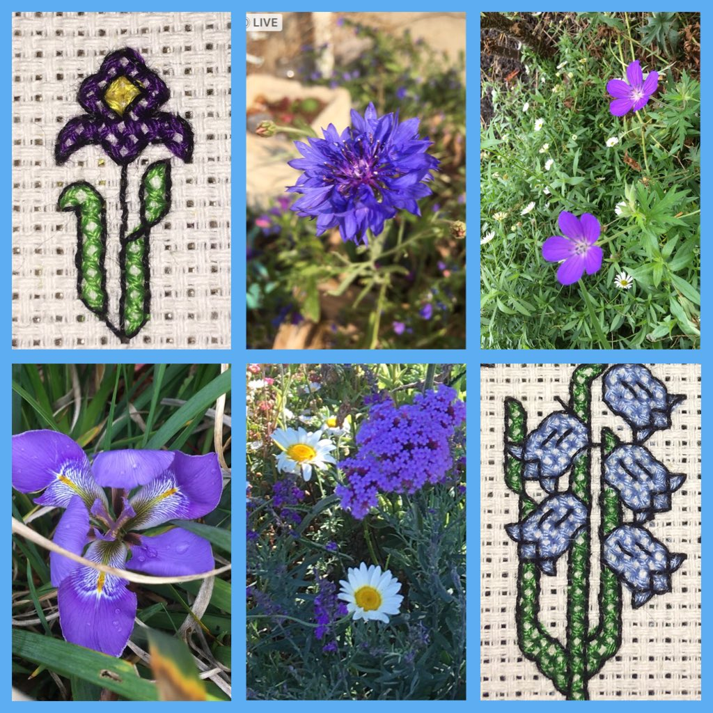 #BlueMonday #Flowers  Just a few blooms and some cheating  with my cross stitch 😃💙💙💙 couldn't resist including a daisy or two (my fave)
