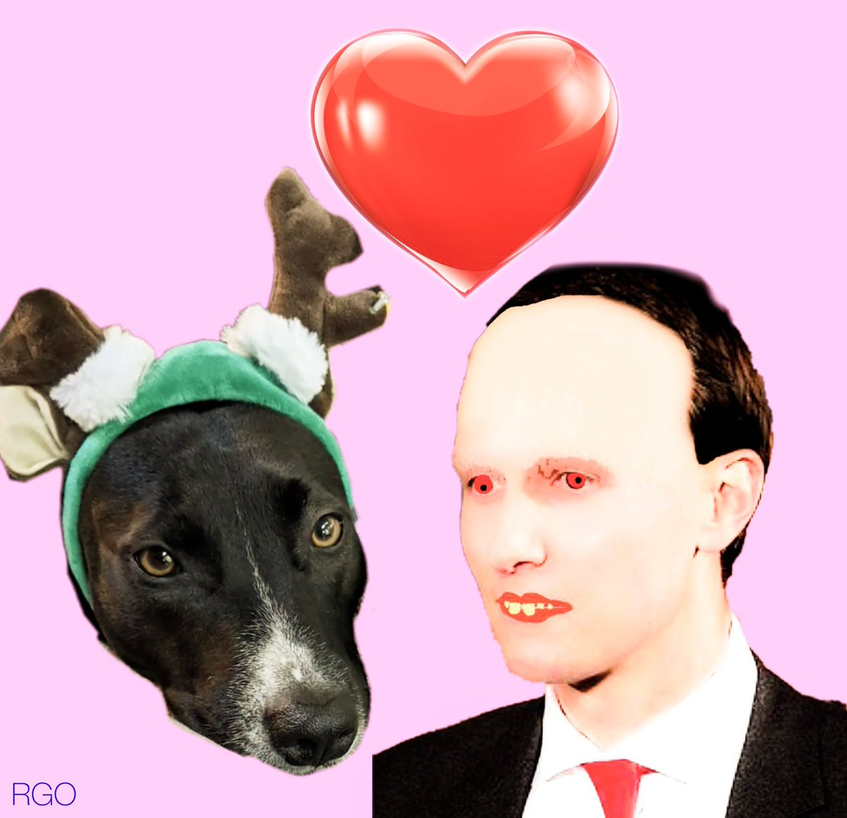 Jared remarries a border collie named Cha Cha #AfterTrump