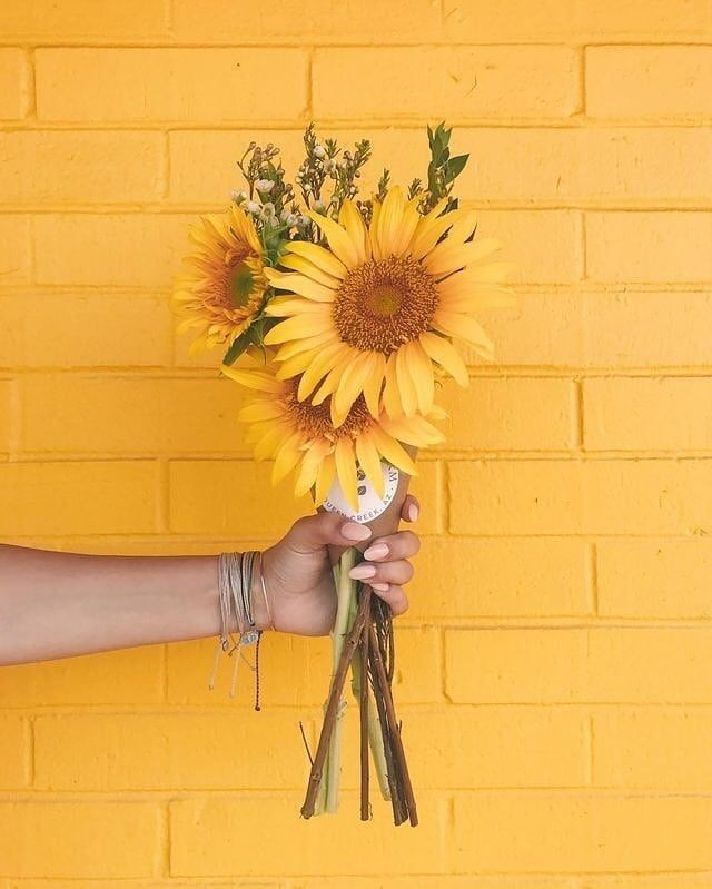 Theme :yellow🌻 #yellow #aesthetic #Wallpapers #Flowers #traveling #world