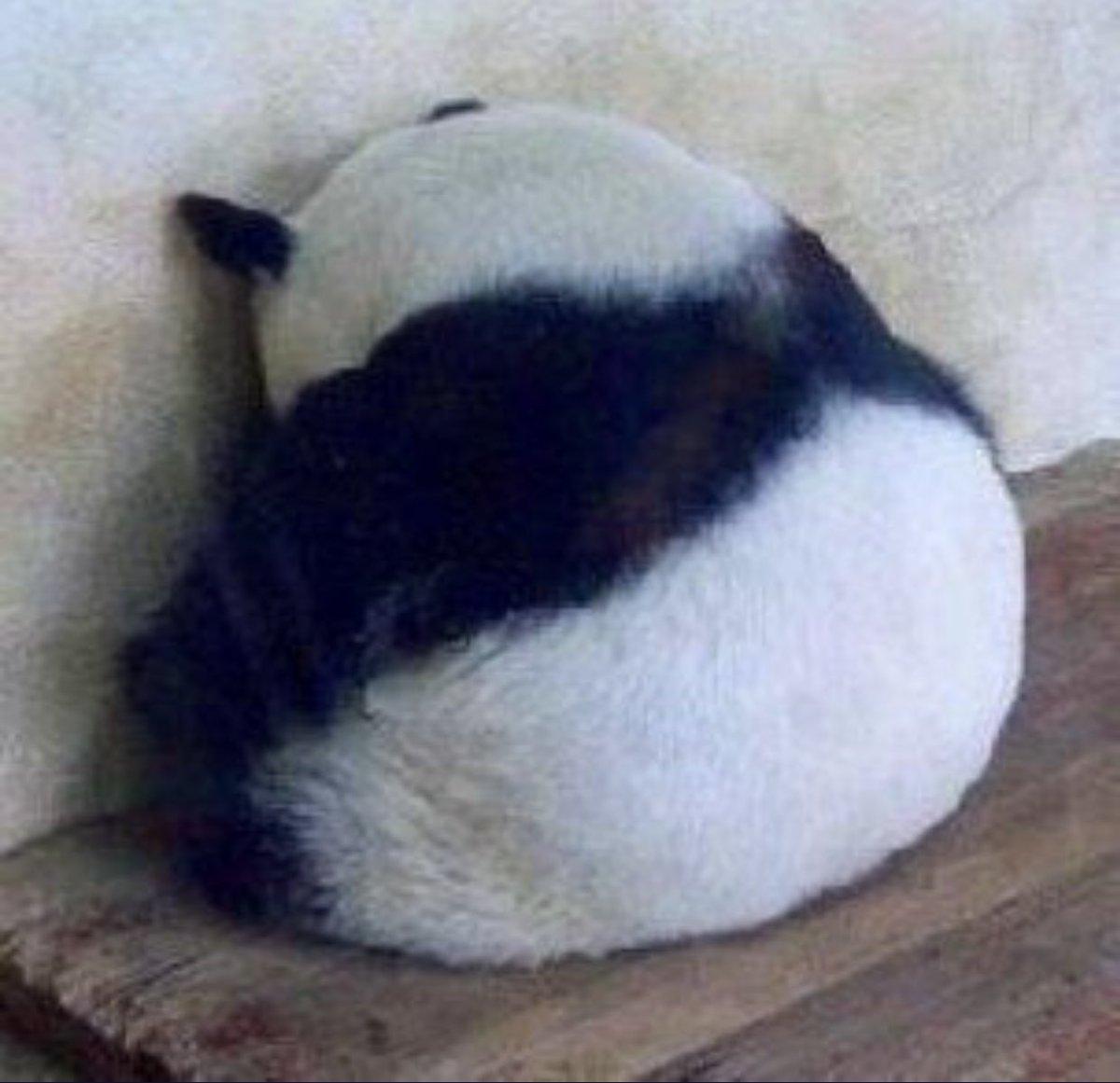 パンダの後ろ姿の可愛さを伝えたい!哀愁漂うこの背中を見て!