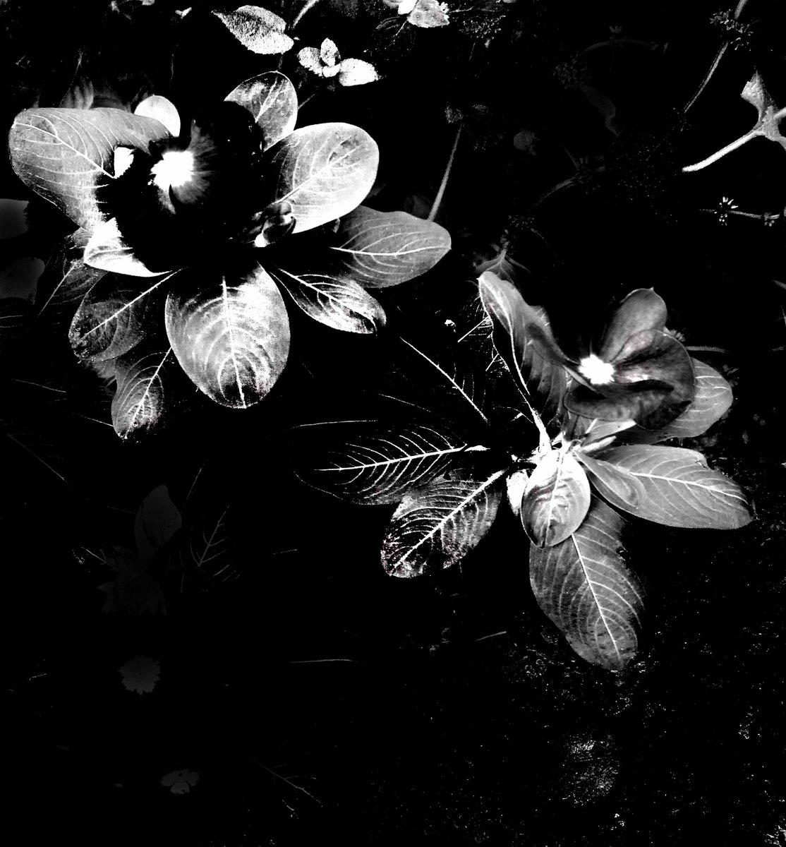 """ Black and White / 06 ""  #blackandwhitephotography #monochrome  #photography #fotografia #blancoynegro   photo by Taizo Hayashi ; Japan"