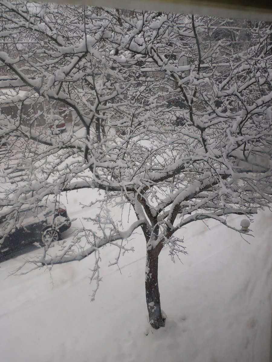 Currently out my window.  #Snowfall #Snowing #MondayMorning #WINTER
