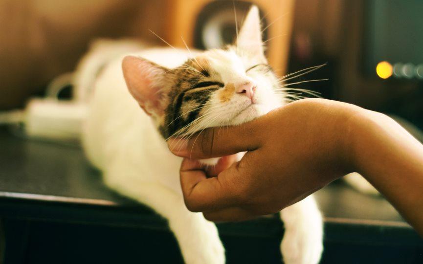 🐈👦🏻👧🏼 'El gato, una mascota perfecta para niños/as con trastorno autista'.  . ▶️  vía @MascotaSalud .  #vitoriagasteiz #petsVG #gatos #perros #petsclínicaveterinaria #veterinario #veterinaria #autismo #TEA
