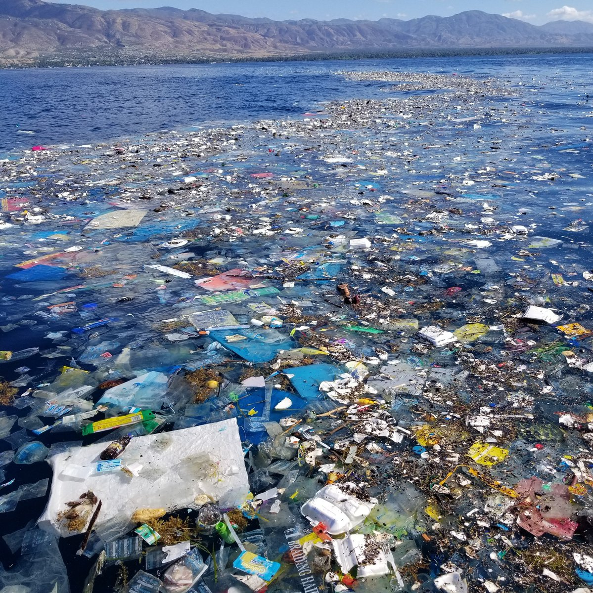 """It's just one piece of plastic"" -said 8 billion people.  Refusing single-use plastic is one of the best ways to fight the ocean plastic crisis.   By saying no and opting for sustainable alternatives, we can be one step closer to curbing the ocean plastic crisis."