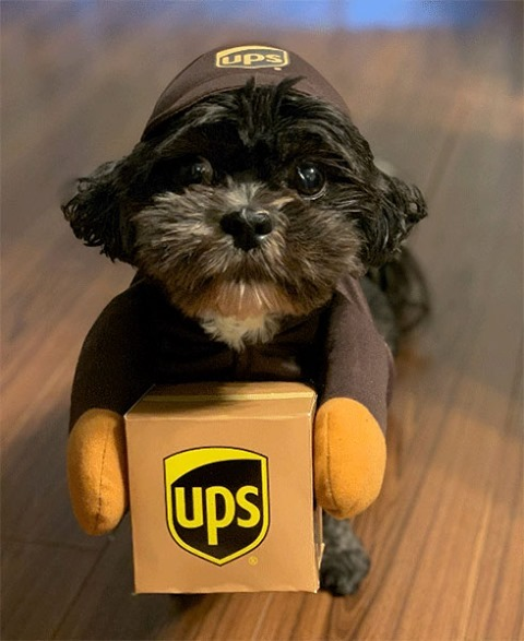 What's the best way to celebrate #NationalDressUpYourPetDay? This cute pup nailed it. 🐶 ✅